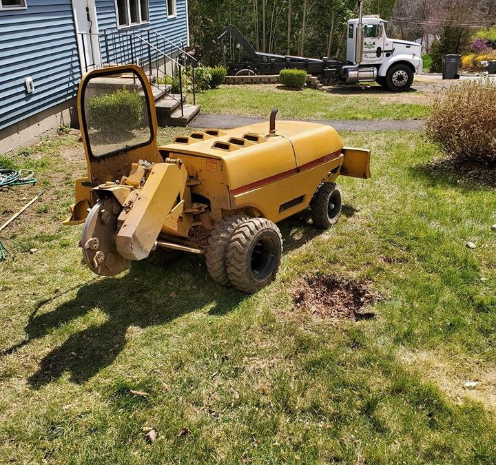 Southington, CT Stump Grinding & Removal